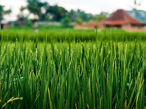 Все компоненты имеют природное происхождение (растения, минералы или водоросли), не используются ингредиенты животного происхождения